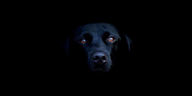 Perro en la oscuridad