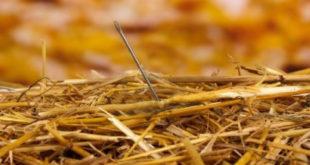 Una aguja en un pajar 2