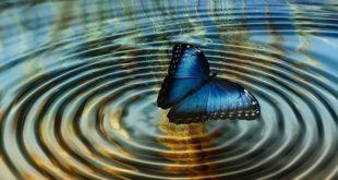 El efecto mariposa 1